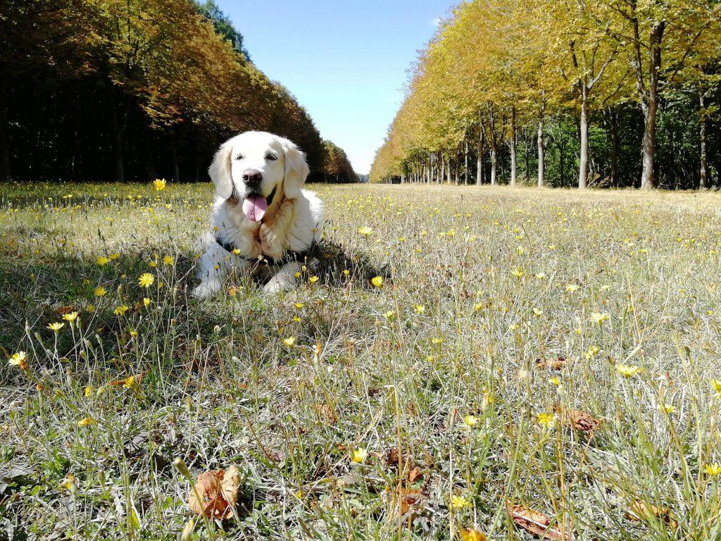 Animalement Nôtre - A propos - Photo chien dans l'herbe